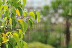 雨と葉っぱ