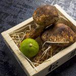 松茸の保存方法は冷凍でOK?知らなきゃ損する注意点とは?