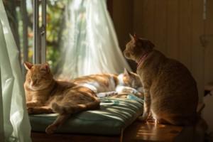 陽だまりの猫(布団)