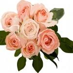 敬老の日に渡す花の種類の定番は?おすすめ6選をドドンと発表!