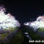 山崎川の桜のライトアップ2018!時間から屋台の情報まで大網羅