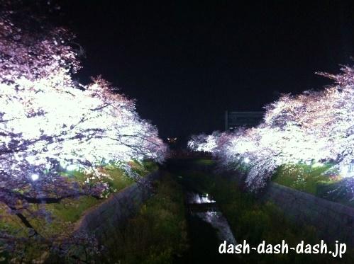 山崎川の夜桜ライトアップ