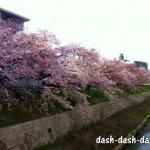 山崎川の桜!駐車場おすすめ3選!安くて広くて安心なのはココ