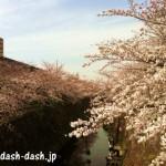 山崎川の桜!ランチをするならココ!ベスト5ランキング2016!