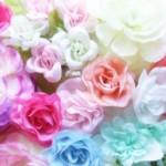 バラの色ごとの意味は?贈る相手やシーン別のおすすめも紹介!