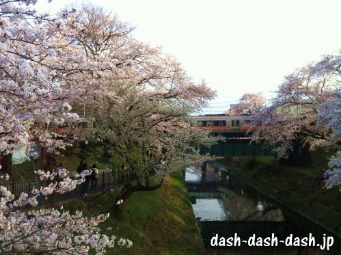 各務原市民公園近く新境川堤の桜並木