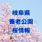 岐阜県 養老公園の桜!2017年の屋台・駐車場・定休日情報など!