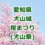 愛知県 犬山城の桜!2016年の祭り情報!屋台やライトアップを確認!