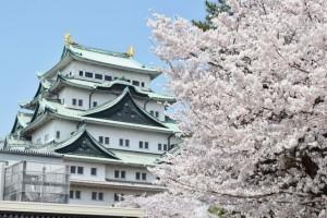 名古屋 桜 スポット