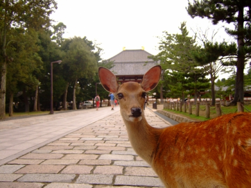 奈良公園(東大寺)の鹿