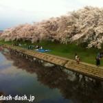 新境川堤の桜並木情報!おすすめ駐車場からライトアップなど大網羅