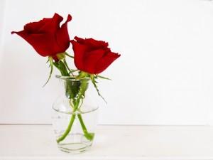 深紅のバラと花瓶