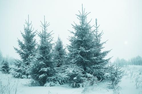 北欧(スウェーデン)の雪が降った森林