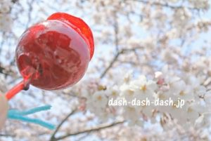 岩倉桜まつり(五条川)の桜10