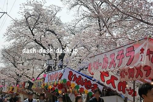 岩倉桜まつり(五条川)の桜06