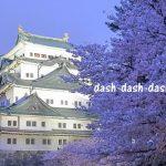 名古屋城の桜のライトアップ2017!時間の狙い目は?駐車場は?