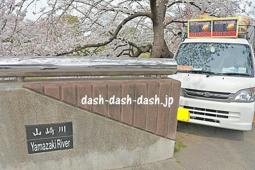 山崎川の桜03(焼き芋の移動販売車))