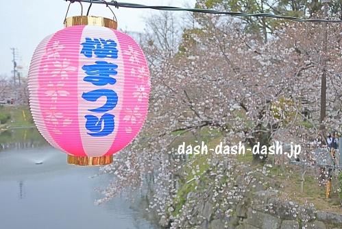 岡崎公園(岡崎城)の桜05