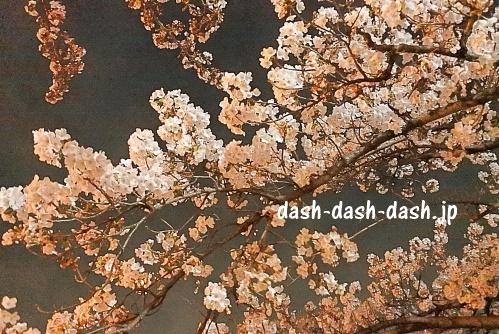 刈谷市亀城公園の夜桜ライトアップ