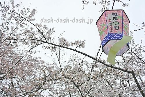 刈谷市亀城公園の桜01