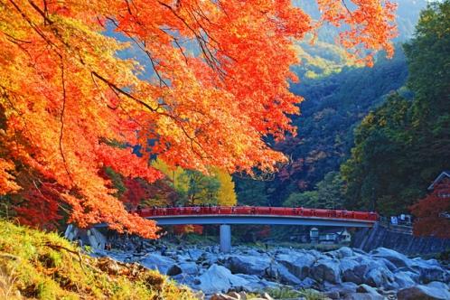 香嵐渓の紅葉と待月橋