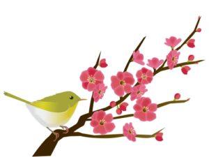 梅の花とウグイス(うぐいす)