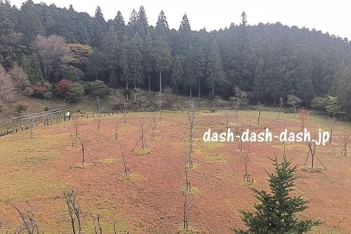 本宮山県立自然公園(桜・ミズバショウ)