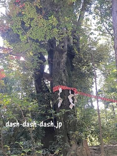 白山宮連理木