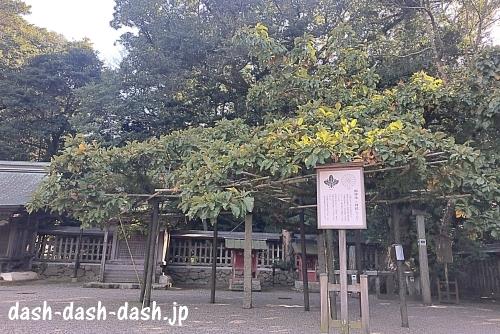 宗像大社神木楢の木01