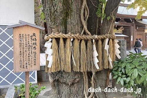 夫婦銀杏(めおとぎなん・櫛田神社パワースポット)01
