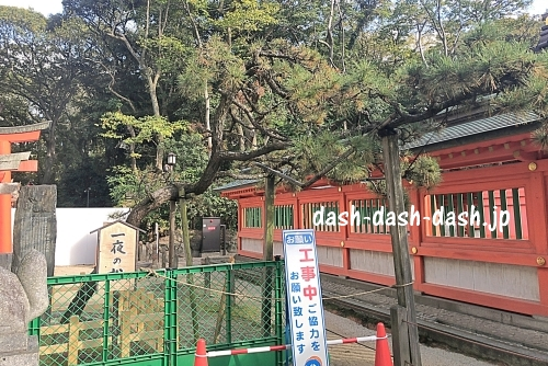 御神木一夜松(福岡稲荷神社・住吉神社)