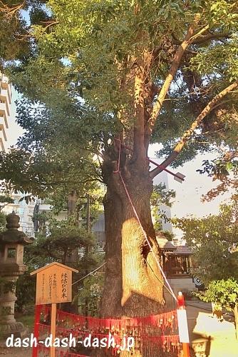 三輪神社(名古屋大須)の九寿の木(縁結びの木)01