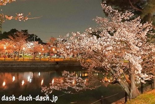 刈谷市亀城公園の夜桜06