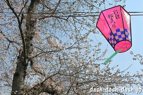 [五条川]岩倉桜まつり01