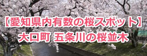 大口町五条川の桜並木00