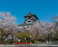 春の犬山城(桜)