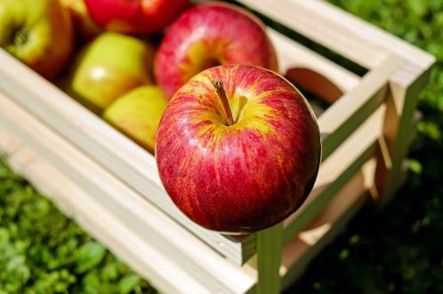 りんご(apple)