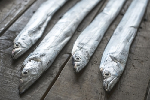 タチウオ(太刀魚)