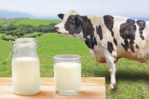 ホルスタイン(牛乳と牛)