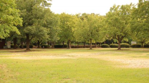 小幡緑地公園の芝生広場
