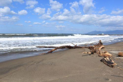 海岸の流木